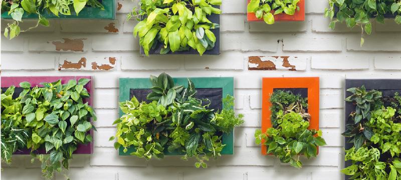 jardim vertical vasos meia lua : jardim vertical vasos meia lua:Faça você mesmo: tenha um jardim vertical em casa