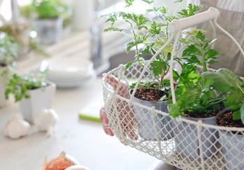 3 Dicas simples para ter uma horta em casa