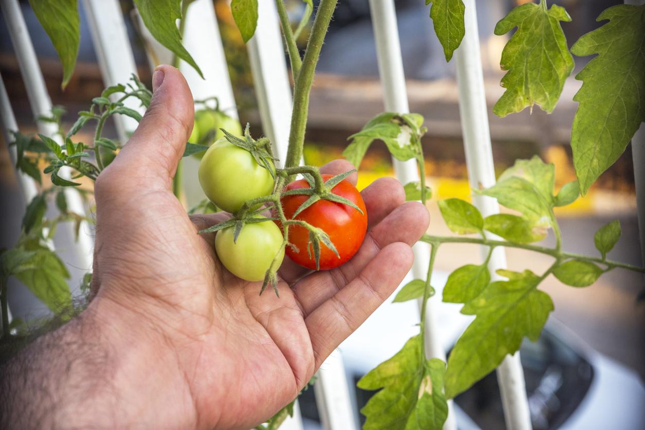 Além dos benefícios para a saúde física, manter uma horta em casa é uma ótima estratégia para saúde mental! Então aproveite estas dicas!