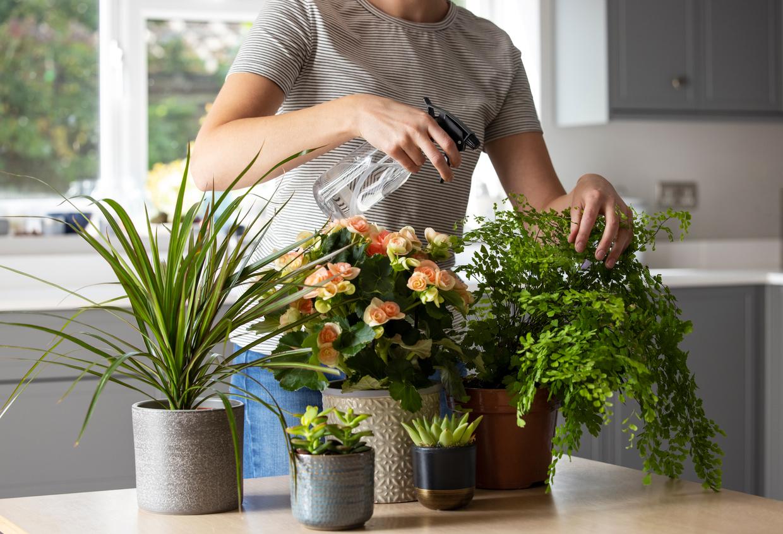 Já é hora de florescer o jardim, então, saiba como ter as plantas perfeitas para cada tipo de ambiente e em diferentes cômodos do seu lar